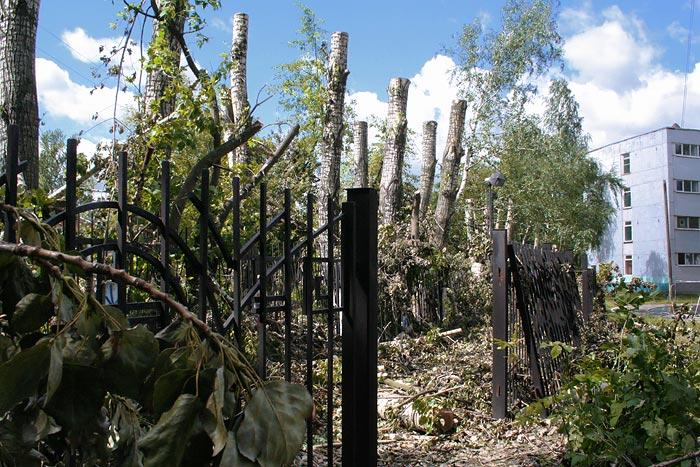 Когда-то деревья были большими, а проблемы маленькими